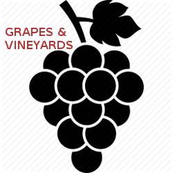 Grapes and Vineeyards, Learn About Grape Growing and Wine Vineyards